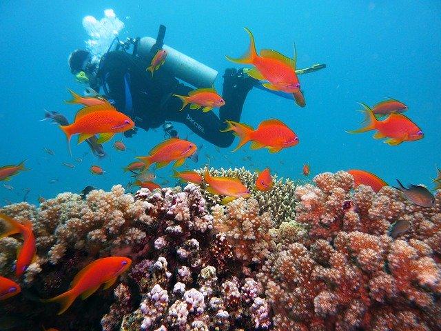 best places to scuba dive