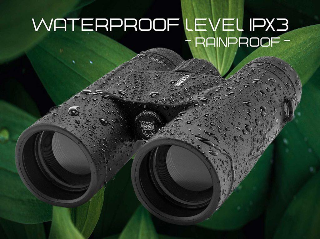 Best Budget Binoculars for Birding