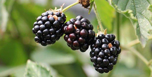 berries,